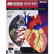 4D Human Deluxe Heart Body Anatomy Model